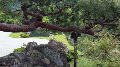 pine bough_400w